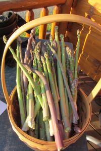 Fresh cut asparagus spears can be flash steamed and frozen OR shared with neighbors...which is always the more stimulating of the two options.
