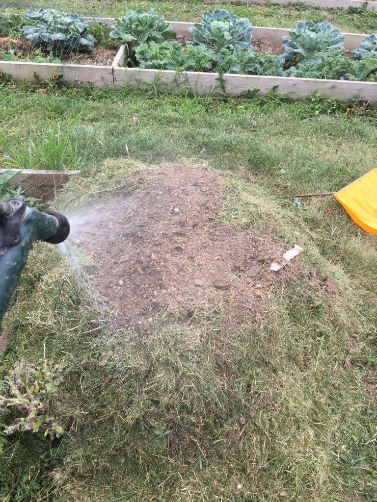 wildloose-watering-manure-pile