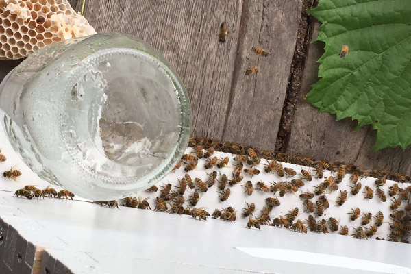 wildloose bees keep hive cool