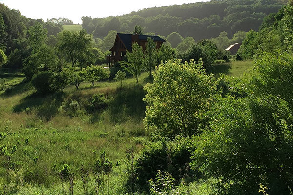 wildloose farm from deck
