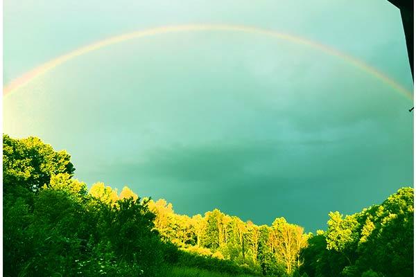 Wildloose rainbow