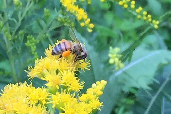 wildloose bee 2